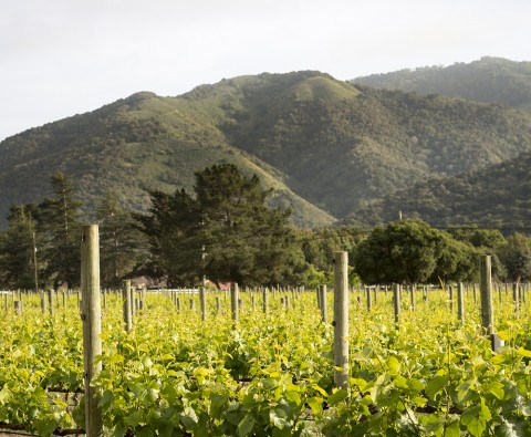 Grape escapes: 10 of the best vineyard holidays