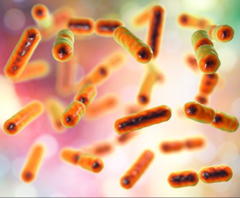 Get familiar with your gut bacteria