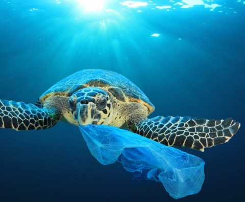 9 Ways to cut down on your plastic use