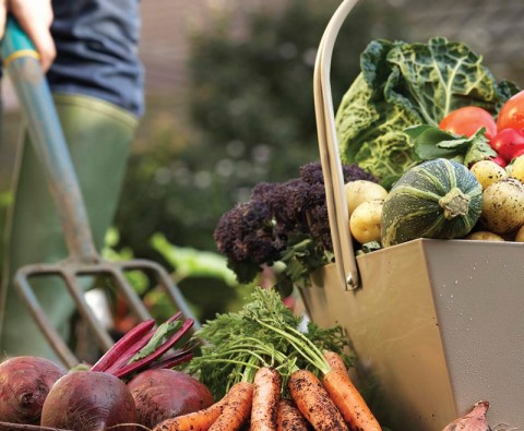 10 Ways to prepare your vegetable garden for spring