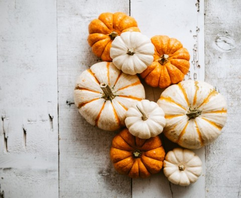 A gardener's guide to growing pumpkins