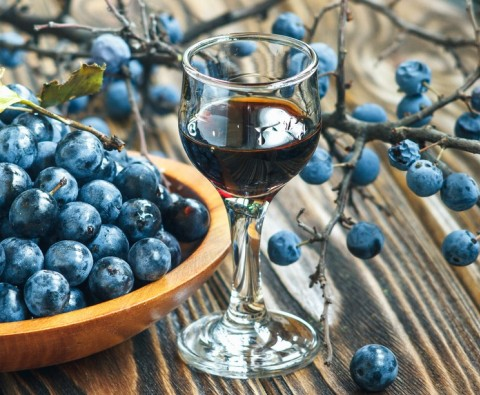 How to forage and make sloe gin