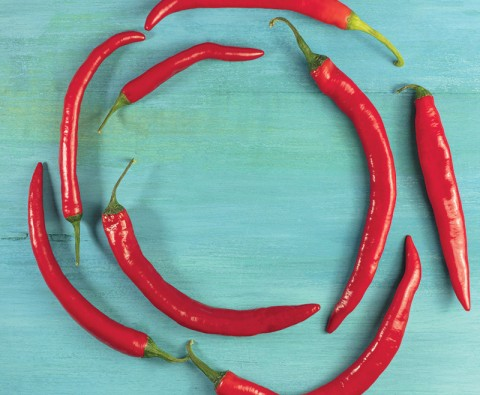 A beginner's guide to growing chillies