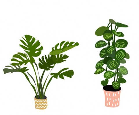 How to stop murdering houseplants