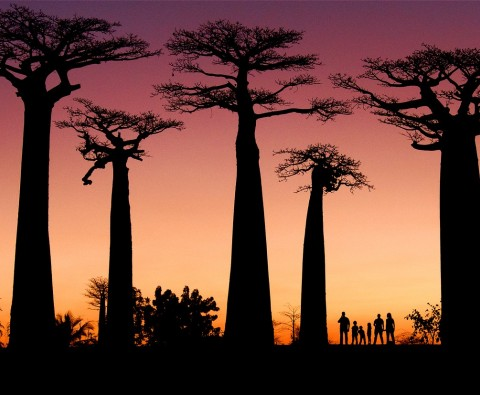 5 Surprising facts about Madagascar