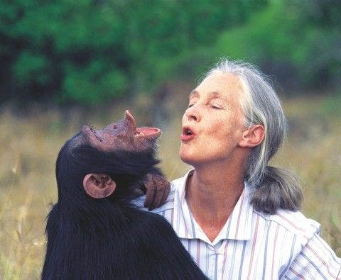 I remember: Dr Jane Goodall