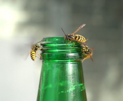 Wasps - Britain's most annoying BBQ guest