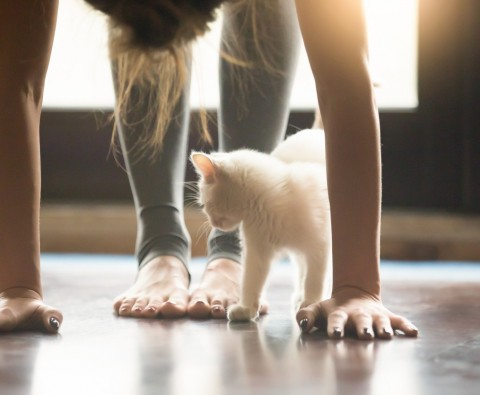Why pet yoga is our new favourite workout