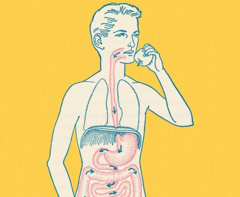 Why your gut is the secret to a healthy mind