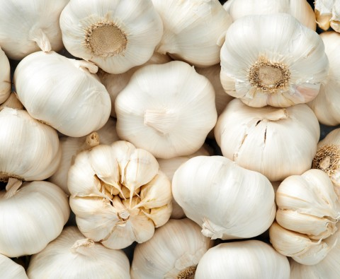 Beginners guide to growing garlic