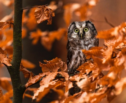 10 Funny autumn animals