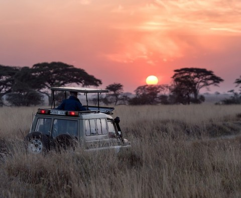 Things to know before your first safari