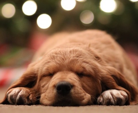 How to keep your dog safe over Christmas