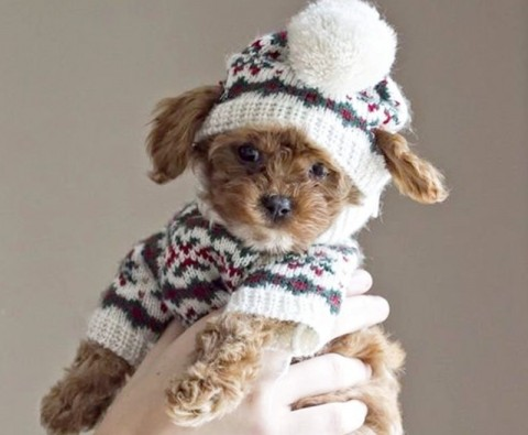 10 Photos of animals in tiny jumpers