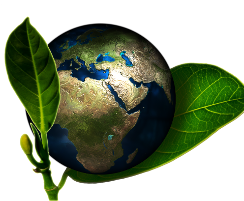 How to make your business more environmentally sound