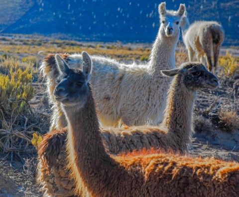 Why you should visit South America's Altiplano