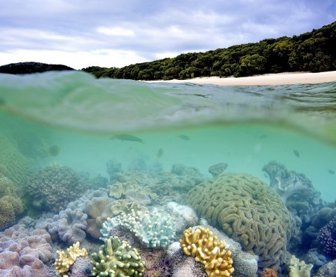 Everything you need to know about the Great Barrier Reef