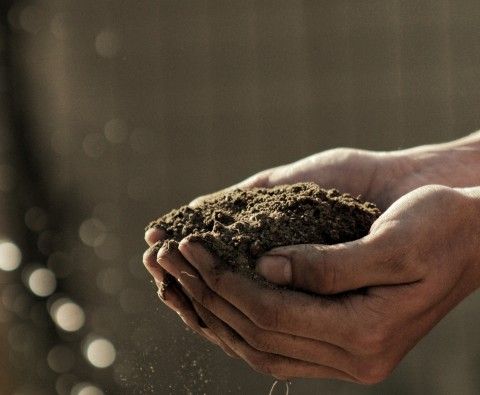 How to prepare your soil for sowing and planting veg