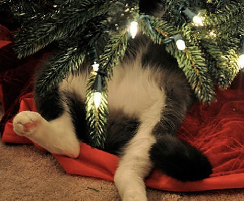 10 Pets who ruined Christmas
