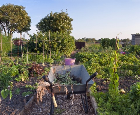 DIY projects for your allotment