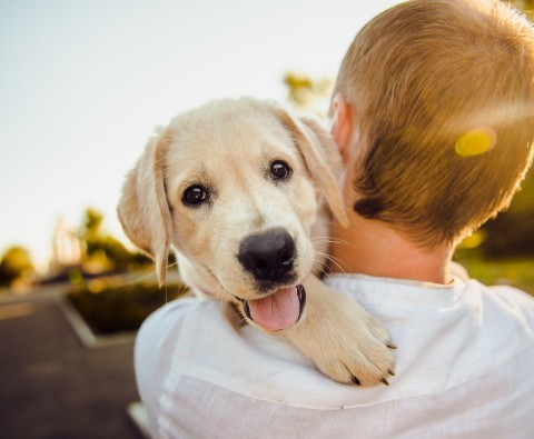 5 Ways to learn to love your dog