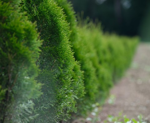 7 Expert hedge cutting tips
