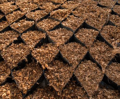 Coir: Everything you need to know
