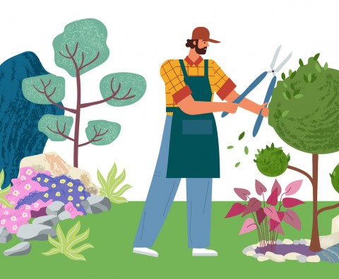 A beginner's guide to lawn care