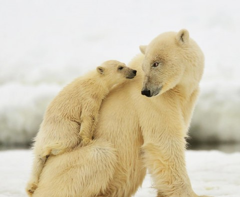 10 Unbearably cute photos of bears and their cubs
