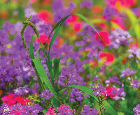 Using colour in your garden