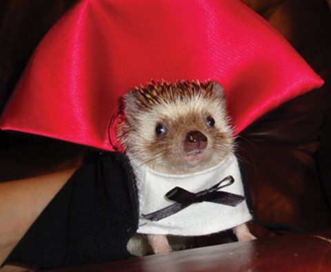 15 Animals who dressed up for Halloween