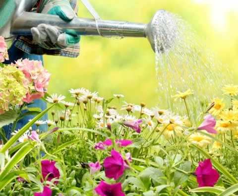 14 planting tricks for rapid results
