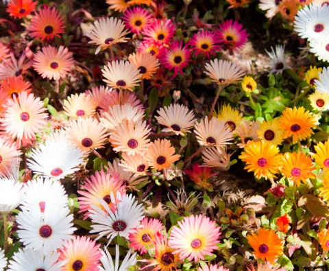 Tips to prolong flowering displays