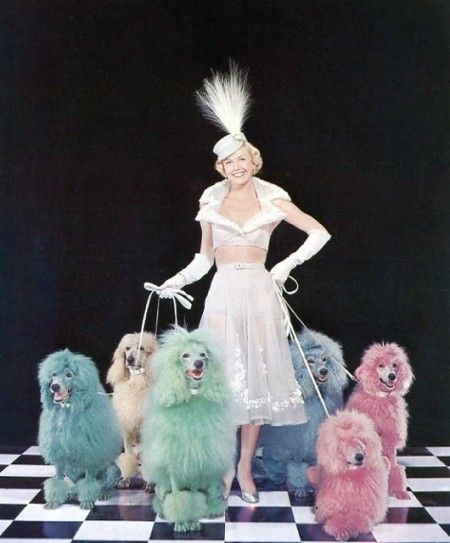 Doris Day poodles