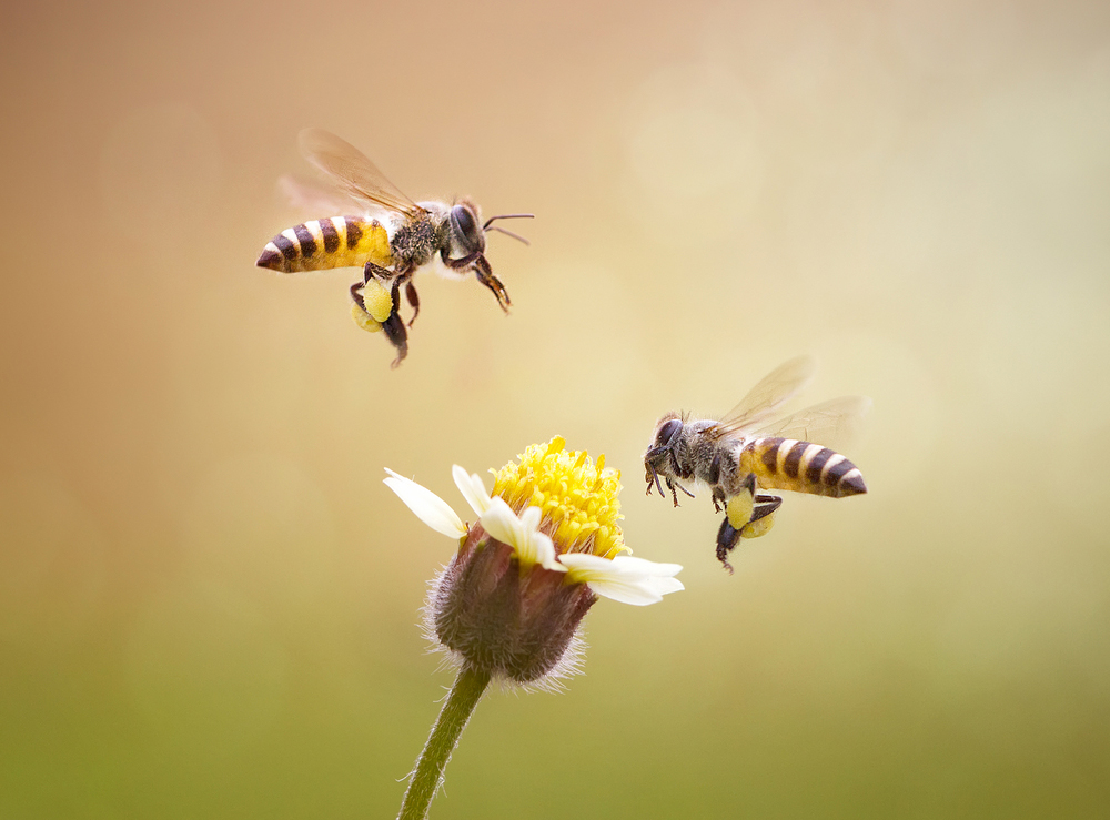 How to attract bees into your garden - Reader's Digest