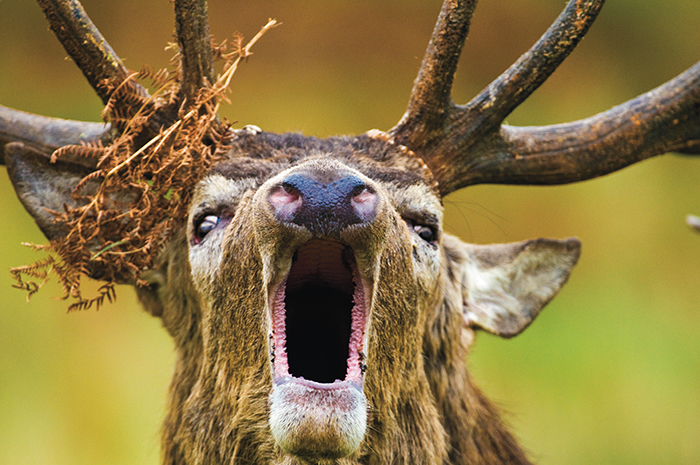 deer photography parkinsons