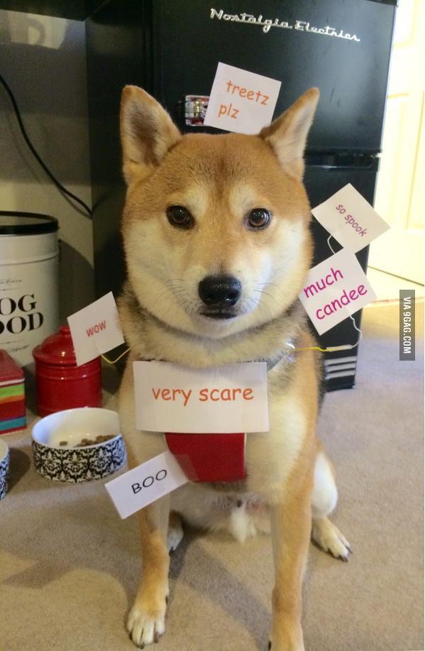 doge costume