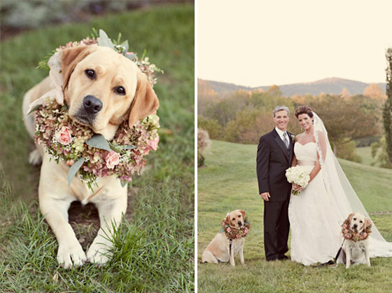 dog marriage ceremony