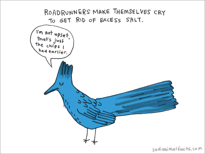 roadrunner sad fact