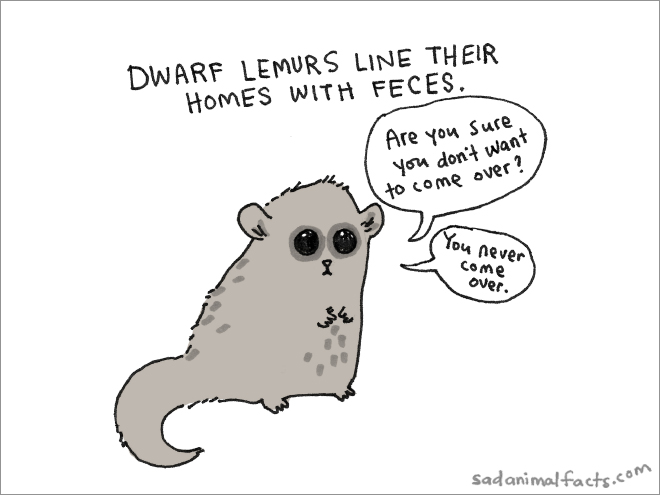 lemur sad fact