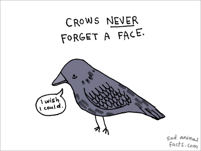 crow sad fact