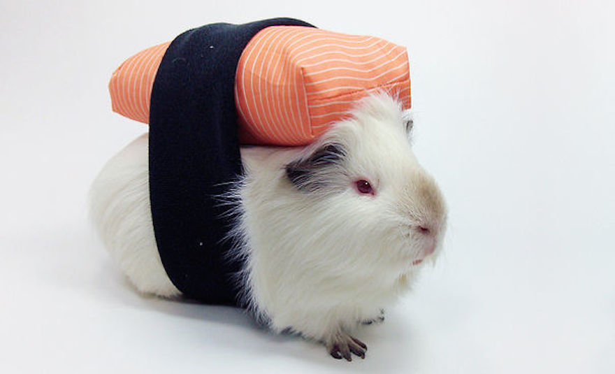 guinea pig sushi halloween