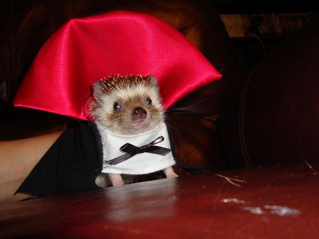 hedgehog halloween costume