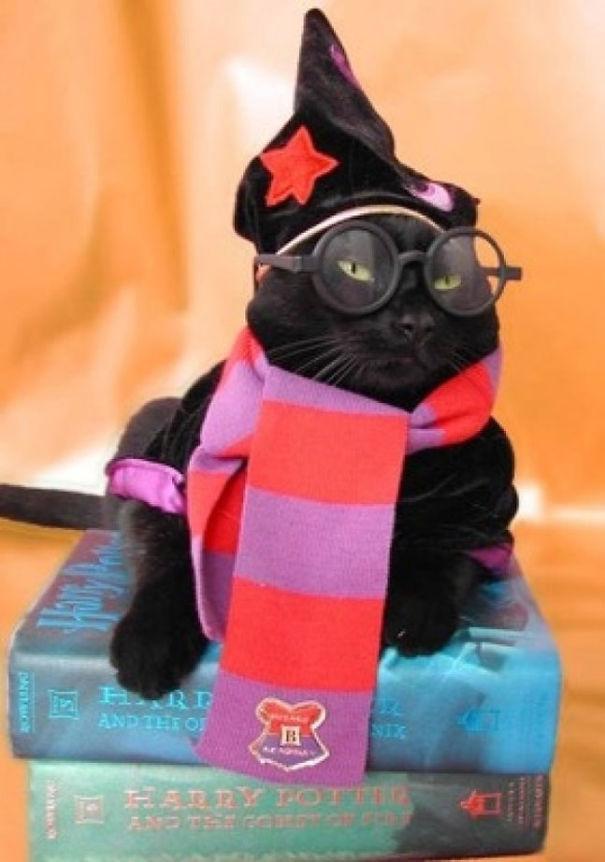cat harry potter costume