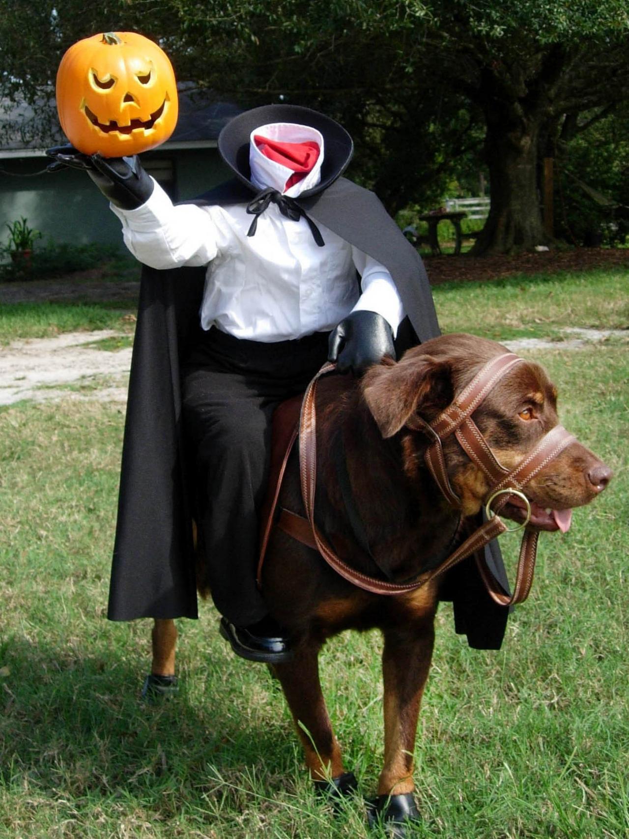 headless dog halloween