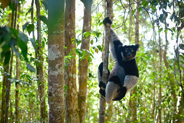 Planet earth ii the landmark bbc one tv event film - Plante jungle ...