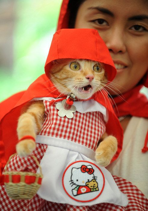 little red riding hood cat costume