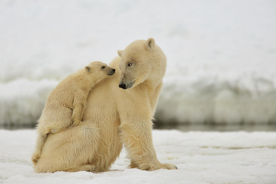 cute cub piggy back mum