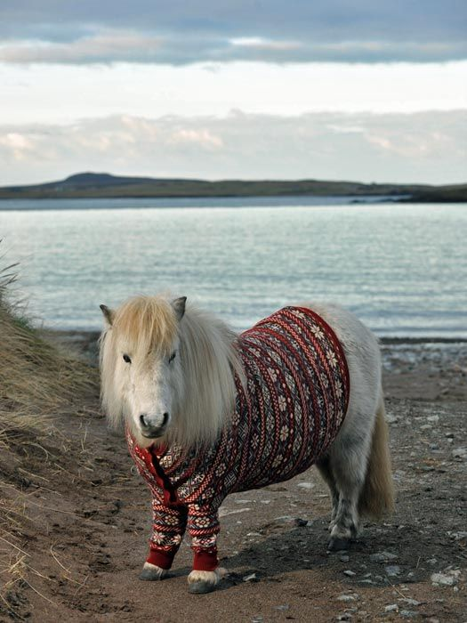 horse in a jumper