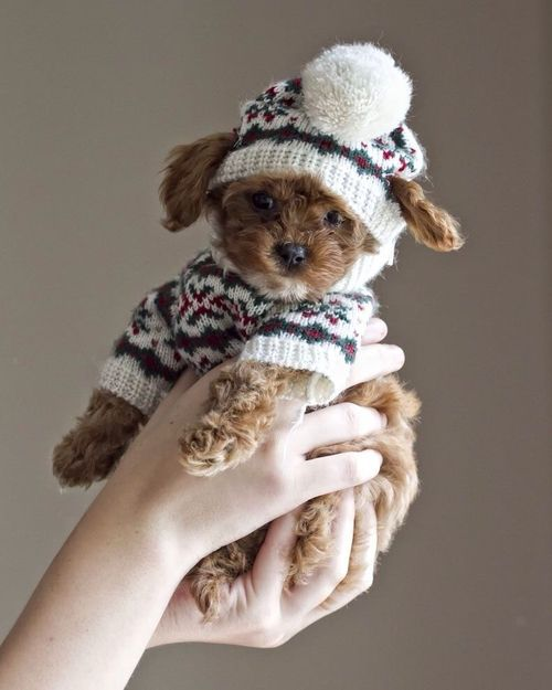 puppy jumper